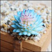 Lithops Azul, Pedra Jade Suculenta 25 Sementes Cacto Exótico